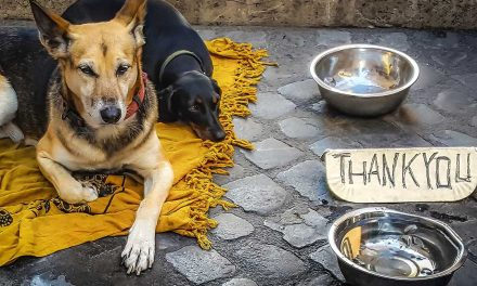 """K-9 Angels Charity urge the UK to always """"Opt to Adopt"""""""