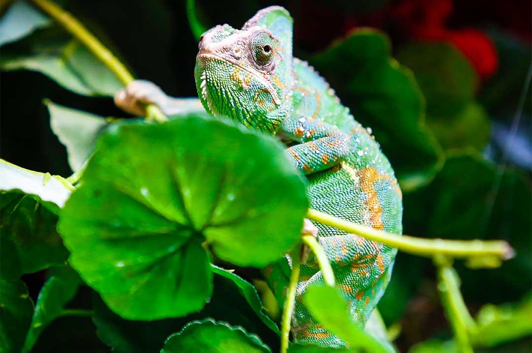 Lizard at Tropical world Leeds