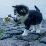 What you need to know before getting your first pet