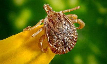 What parents need to know about Lyme Disease