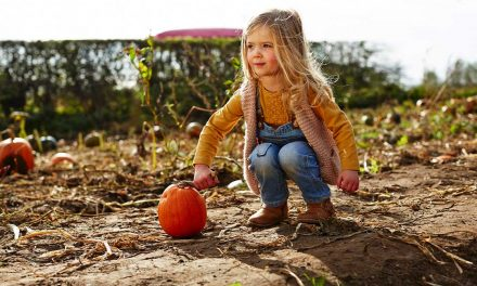 Free pumpkin for every child this Halloween